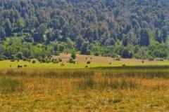 Huella Andina - Pferde