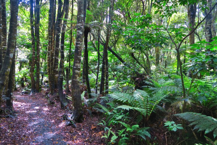 Waipohatu Track