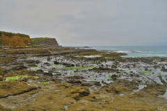 Curio Bay-2