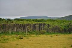 Curio Bay Wald