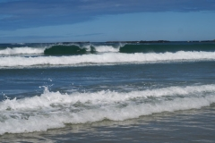 Porpoise Bay - Delfin reitet Welle