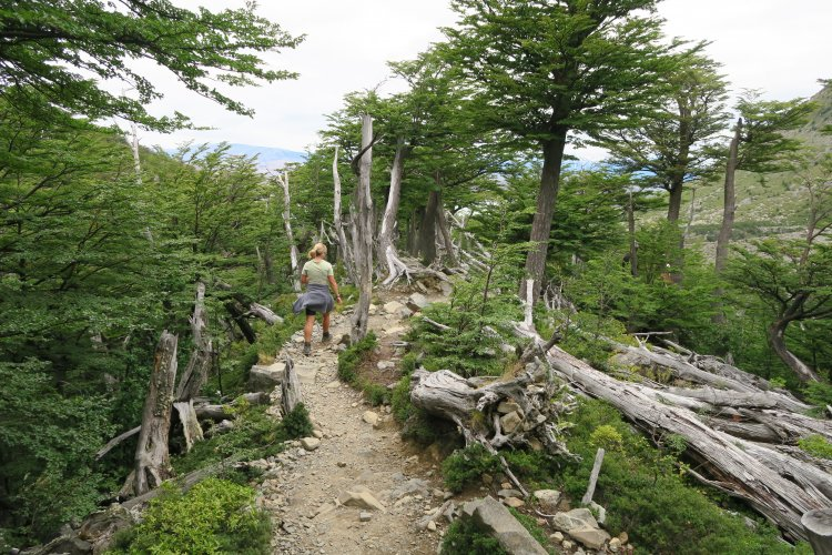Ridge auf dem Weg aus dem Frances Valley
