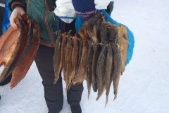 Geraeucherter-Fisch-in-Barabinsk