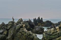 Voegel-auf-Felsen