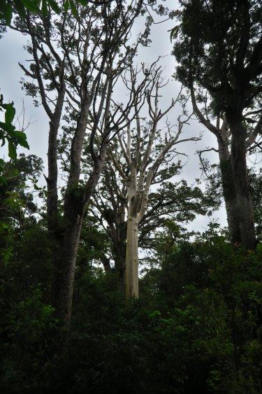 Kranker Baum