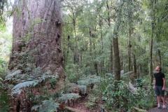 Kauri Stamm - Mensch