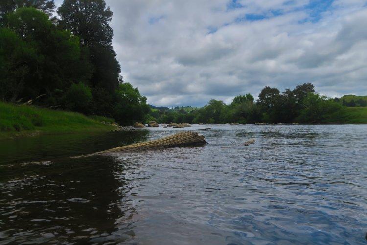 Whanganui River-3