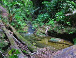 Morere Springs Reserve – Morere Hot Springs